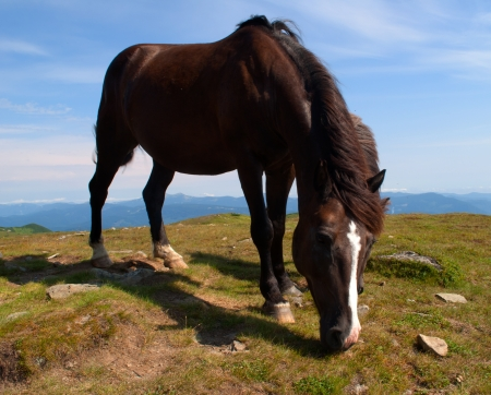 brown horse with a white stripe on his face chewed grass on a background of blue sky photo