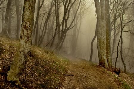 霧と森林へのパス