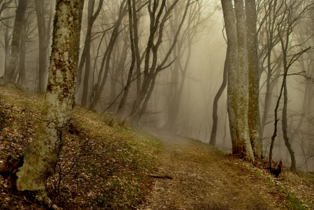 Path to the forest with fog Standard-Bild
