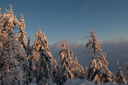 winter landscape of snow covered trees at sunrise in\ mountains