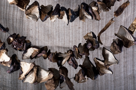 fungous: Dried mushrooms on a string on sackcloth background  Stock Photo