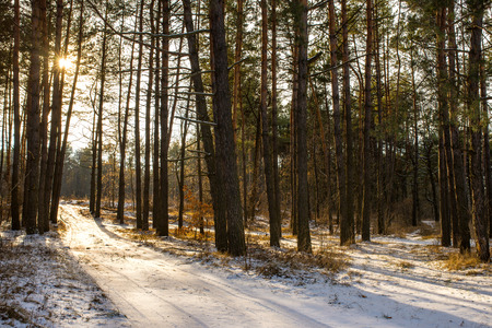 winter forest landscape sun rays and road horizontal orientation photo