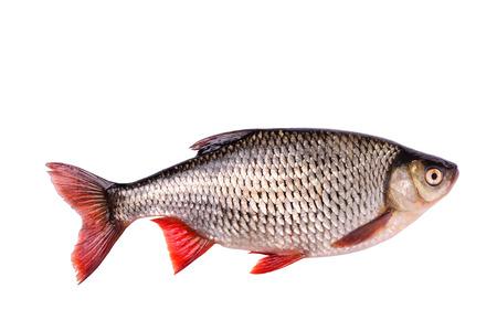 Verse rauwe vis op een witte achtergrond met het knippen van weg Stockfoto