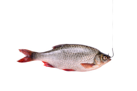 Verse rauwe vis op een haak op een witte achtergrond met het knippen van weg horizontale oriëntatie