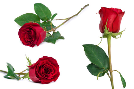 red flower: red rose set flower close-up isolated on white with clipping path included Stock Photo