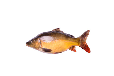 tench: tench fresh raw fish isolated on white background with clipping path