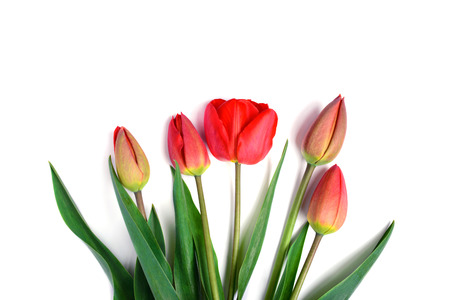 beautiful red tulips close up: bunch of beautiful red tulips boquet isolated on white background