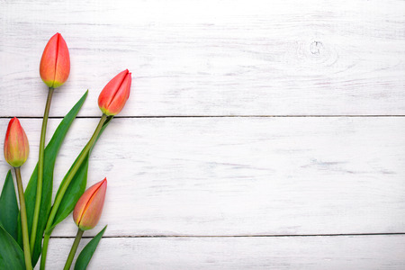 Red tulips flowers on white wooden table. Top view with copy space Stockfoto