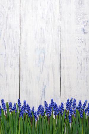 eerste blauwe veren bloemen Muscari grens op witte houten tafel achtergrond met kopie ruimte Stockfoto