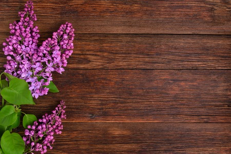 The beautiful lilac on a wooden background, copy spase Imagens
