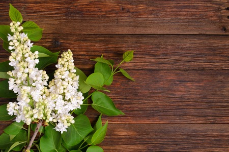 The beautiful lilac on a wooden background, copy spase Standard-Bild