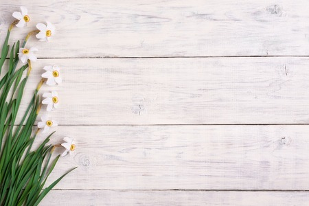 Daffodils flowers on wooden background, copy space Standard-Bild