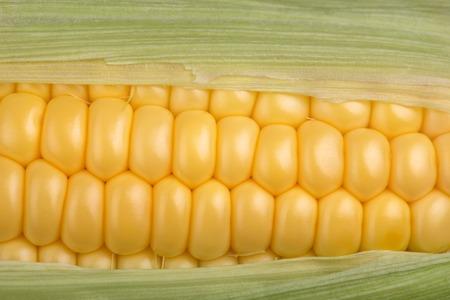 closeup view: Fresh corn cob closeup, maize macro horizontal top view