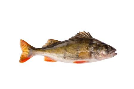 1 つの新鮮な生の魚とまり木に孤立した白い背景