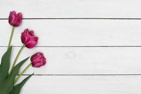 Pink tulips flowers on white wooden table. Top view with copy space