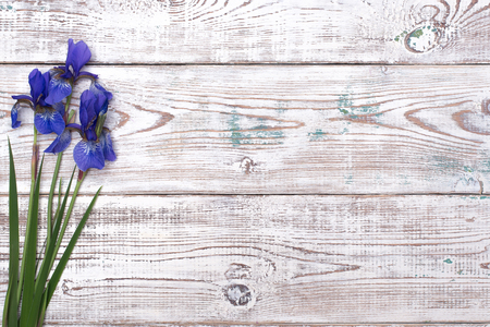 Blue iris flowers on white wooden table. Top view with copy space
