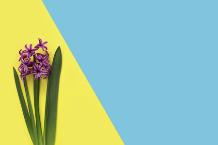 Flowers on blue and yellow color background. Minimal art design Фото со стока