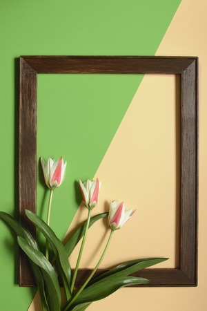 spring tulip flowers with frame on green and beige color background. Minimal art design Фото со стока