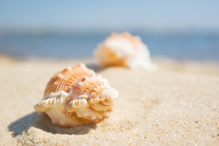 Shell in the sand at the beach, focus on the shell. Stock Photo - 9437556