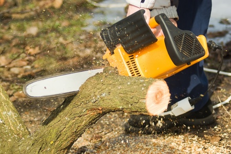 Man with chainsaw cutting the tree  photo