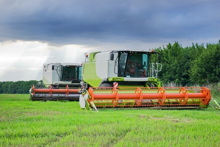 Big  combine working on the Wheat field Standard-Bild