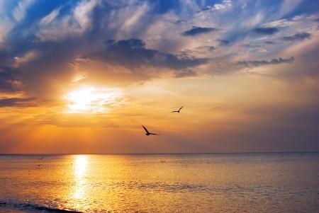 pajaros volando: Temprano en la ma�ana salida del sol sobre el mar y las aves un Foto de archivo