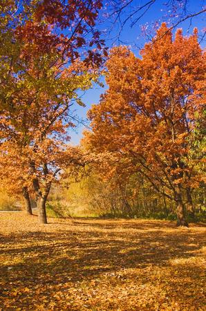 Sunny day at the autumn park Standard-Bild