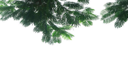 Small leaf background. on tree beautiful natural tropical . isolated on white background, with copy space.