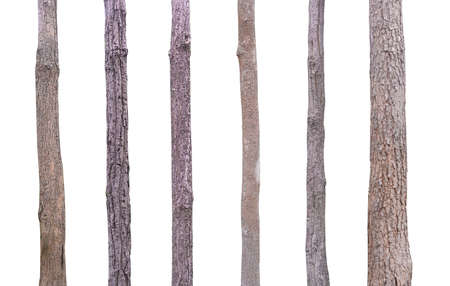 set tree trunk  used for design Isolated on white background