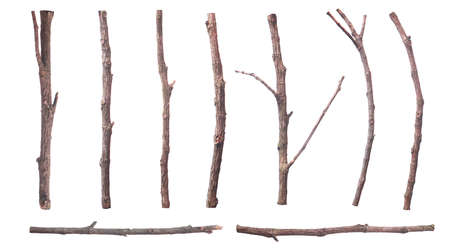 set of dead dry twigs shaped brown bark Isolated on white background