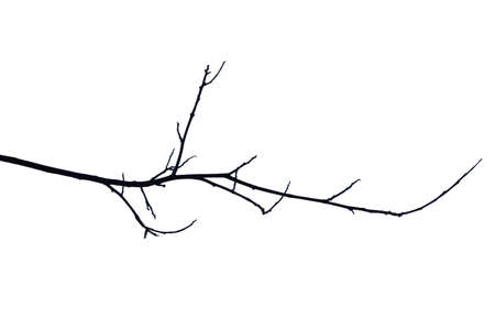 Dry branches Cracked dark crust Part of the tree beautiful from the forest Isolated on white background