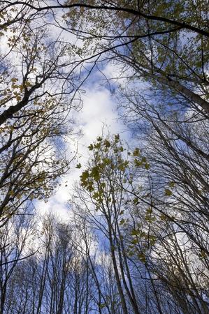bardonecchia: Tree on a blue sky - autumn season