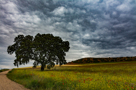 Wild field with two holm oaks and a road beside with stormy clouds
