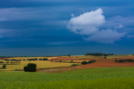 Cereal and wild coloured fields under blue stormy clouds Banco de Imagens