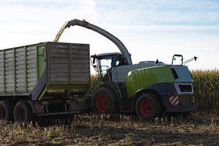 maize: Maize harvester harvests of corn