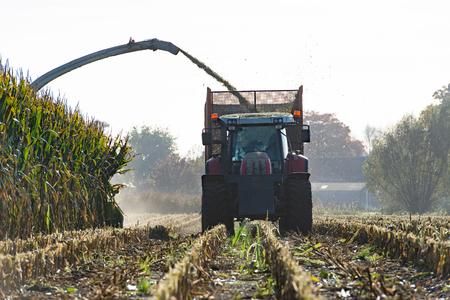 harvests: Maize harvester harvests of corn