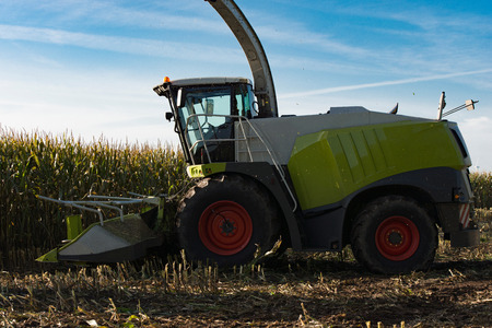 canada agriculture: Forage at harvest of corn Maize Stock Photo