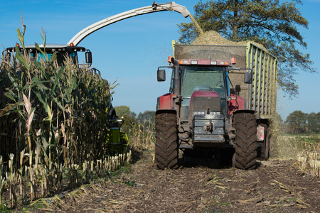 Forage at harvest of corn Maize Stock Photo
