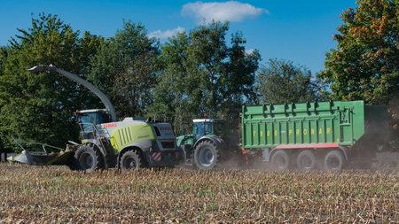 fodder corn: Harvest corn harvester and tractor in corn