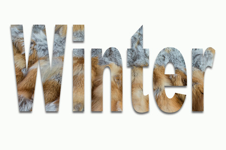 luxuriously: Winter red fox fur in a font trained