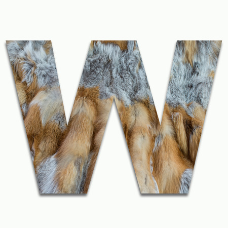 W red fox fur in a font trained Stock Photo