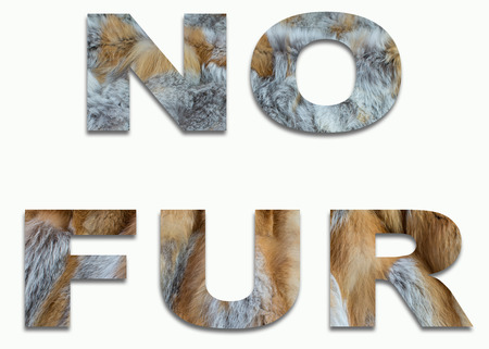 NO FUR red fox fur in a font trained Stock Photo