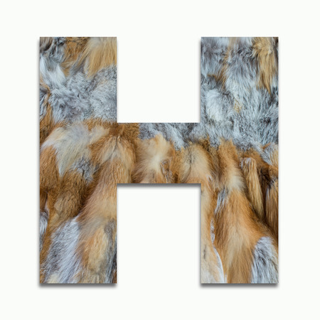 H red fox fur in a font trained Stock Photo