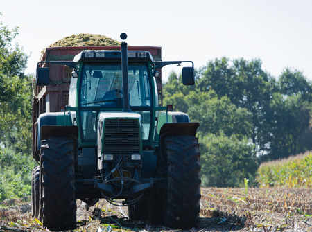 Corn harvest, corn harvester in action, harvest truck with tractor