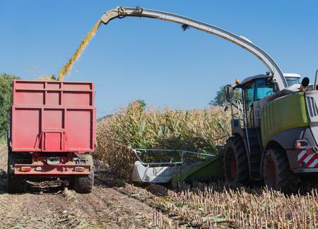 トウモロコシの収穫、アクション、トラクターで収穫トラックでトウモロコシ収穫機