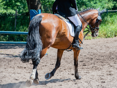 Equestrian sport on a dressage course Stock Photo - 102865974