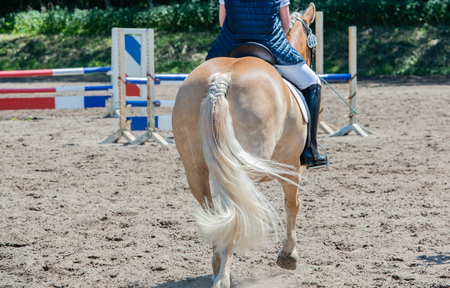 show jumping as a competitive sport with an obstacle