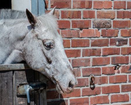 Horse at a horse stable