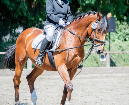 Equestrian sport on a dressage course Stock Photo - 102811872