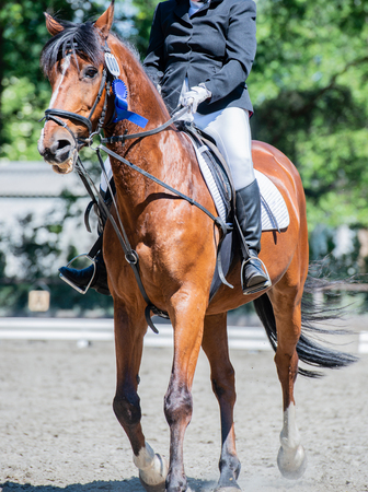 Equestrian sport on a dressage course Stock Photo - 102847851